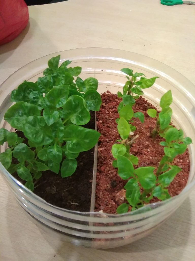 plant with worm castings vs normal soil