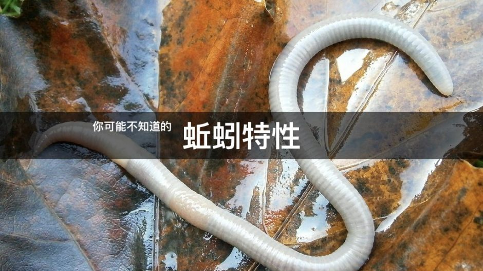 Earthworm characteristics you may not know