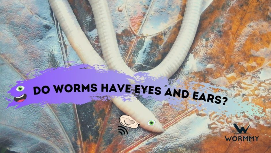 do worms have eyes and ears blog banner