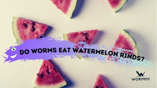 do worms eat watermelon rinds and flesh blog banner