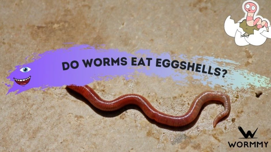 do worms eat eggshells featured image