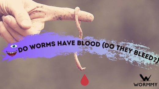 do worms have blood featured image banner
