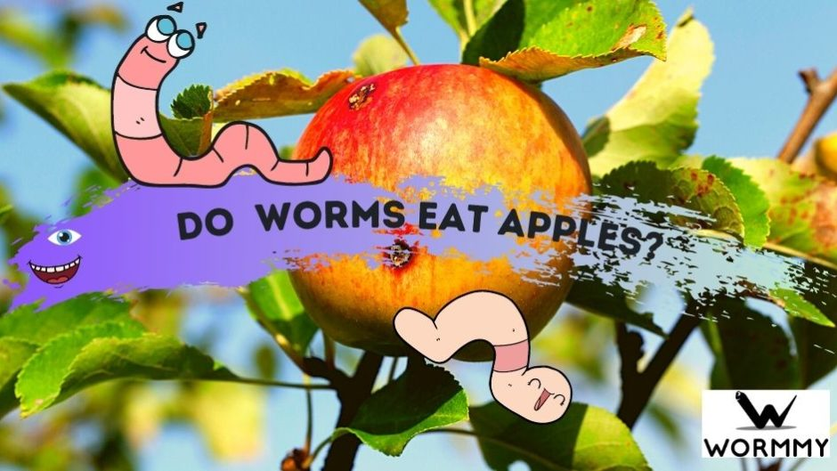 do worms eat apples blog banner