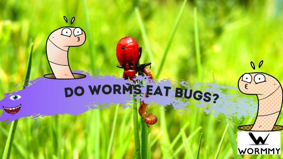 do worms eat bugs blog banner