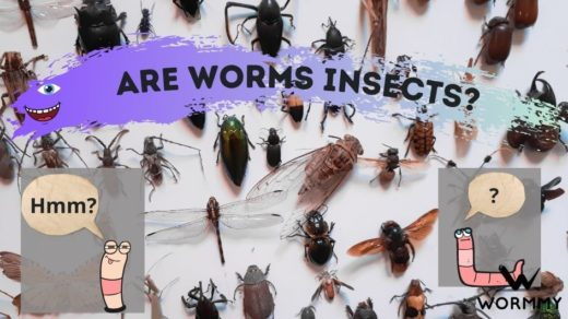 are worms insects