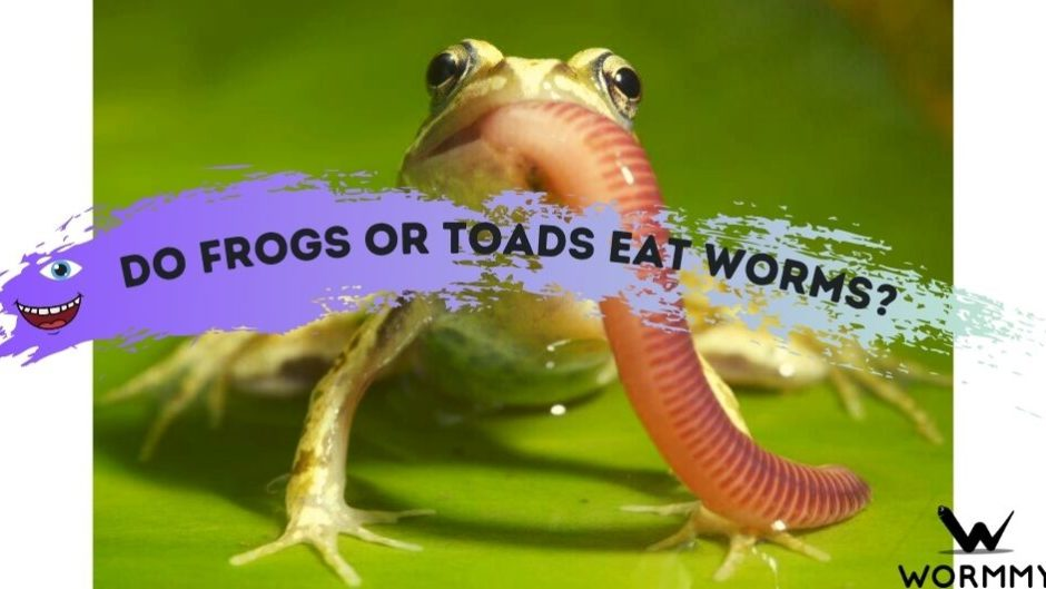 do frogs eat worms blog banner