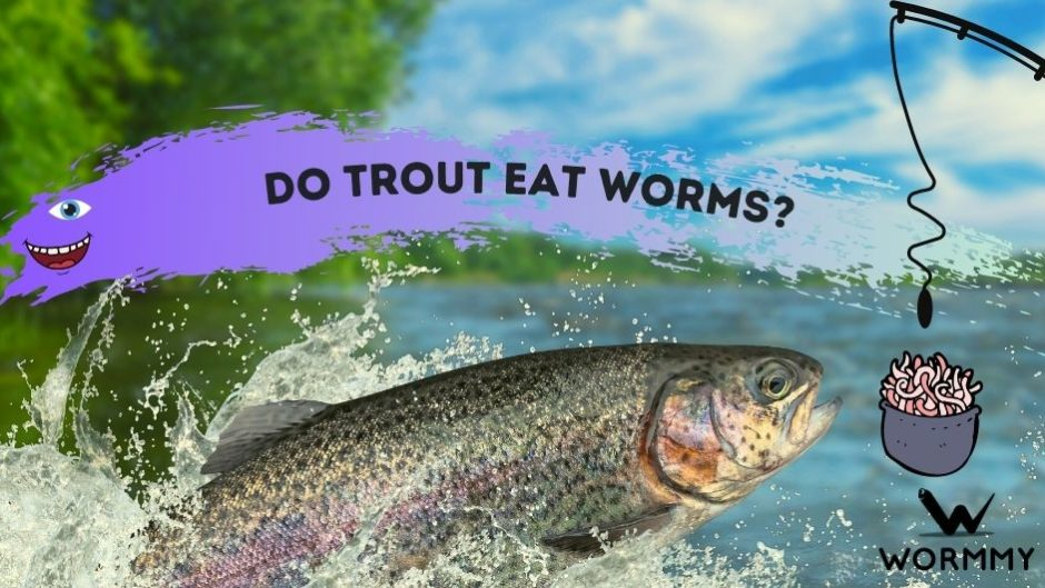 do trout eat worms blog banner