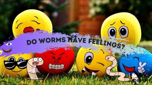 do worms have feelings blog banner