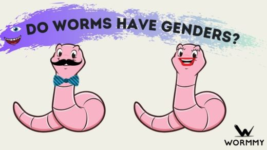do worms have genders