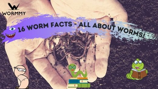 worm facts featured blog banner