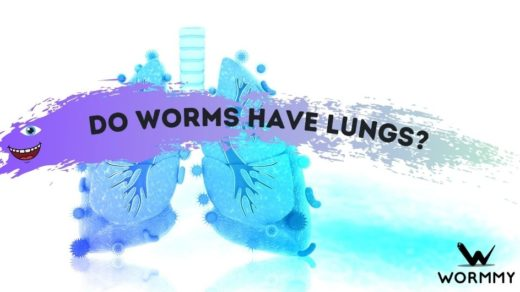 do worms have lungs blog banner