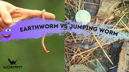 earthworms vs jumping worms blog banner