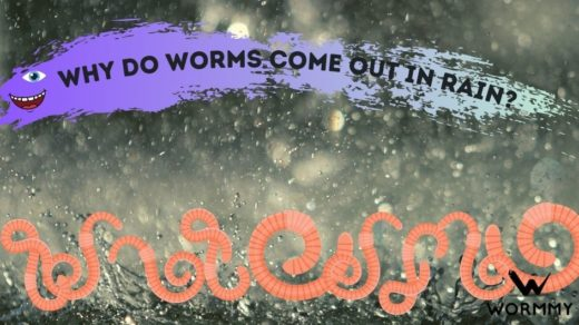 why do worms come out when it rains blog banner