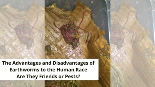 benefits and disadvantages of earthworms to humans banner